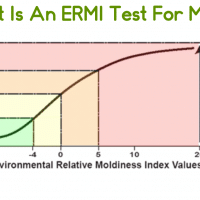 What Is An ERMI Mold Test?