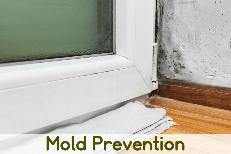 An attempt at mold prevention - water leak under a door and mold on wall