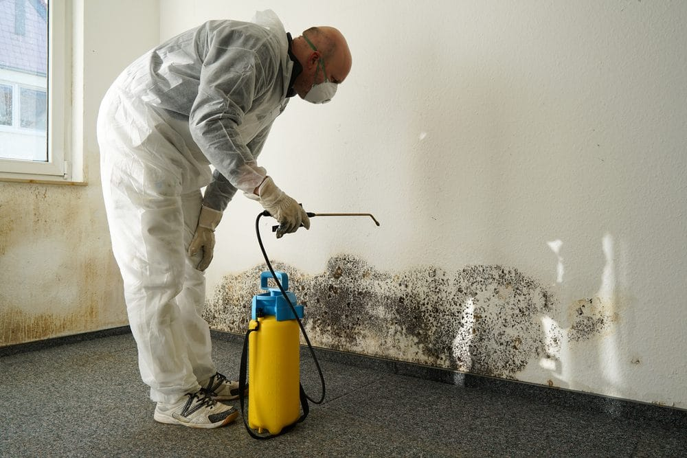 A man using a mold sprayer as a mold cleaning product option on a moldy wall