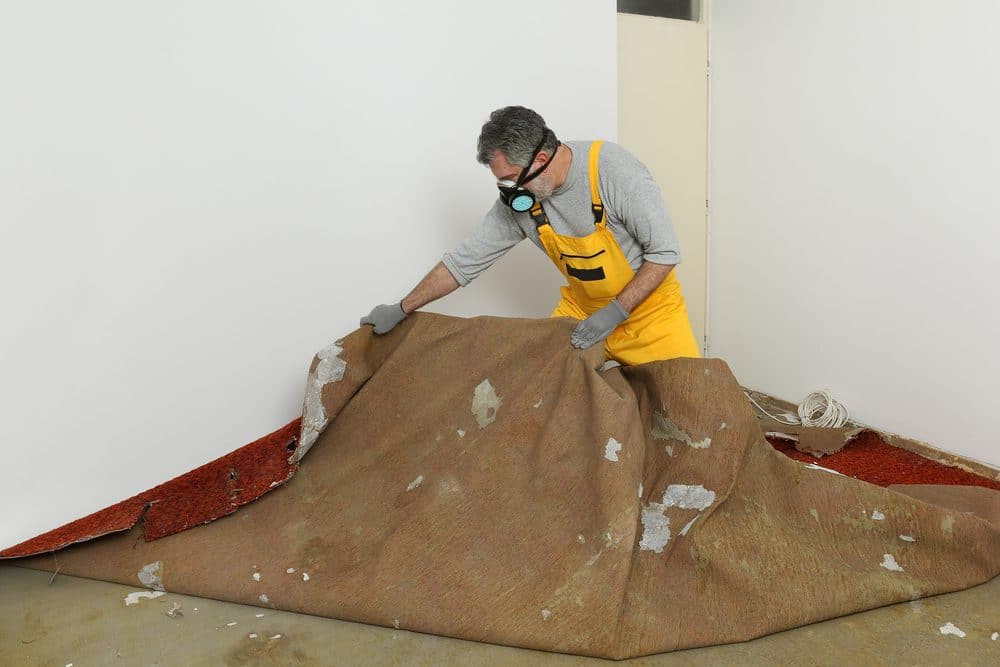 Adult worker with protective mask removing old carpet in room as part of a DIY mold removal effort