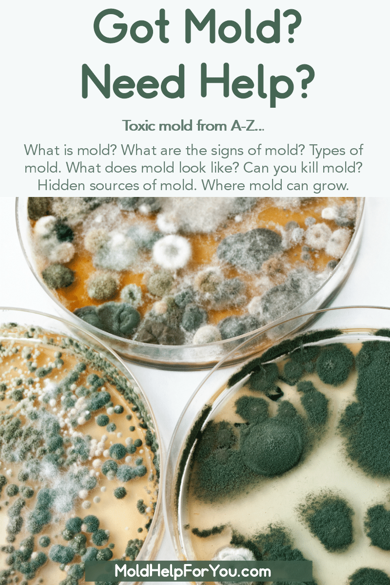 Petri dishes with various molds growing. What is Mold and Other Mold Facts is written below.
