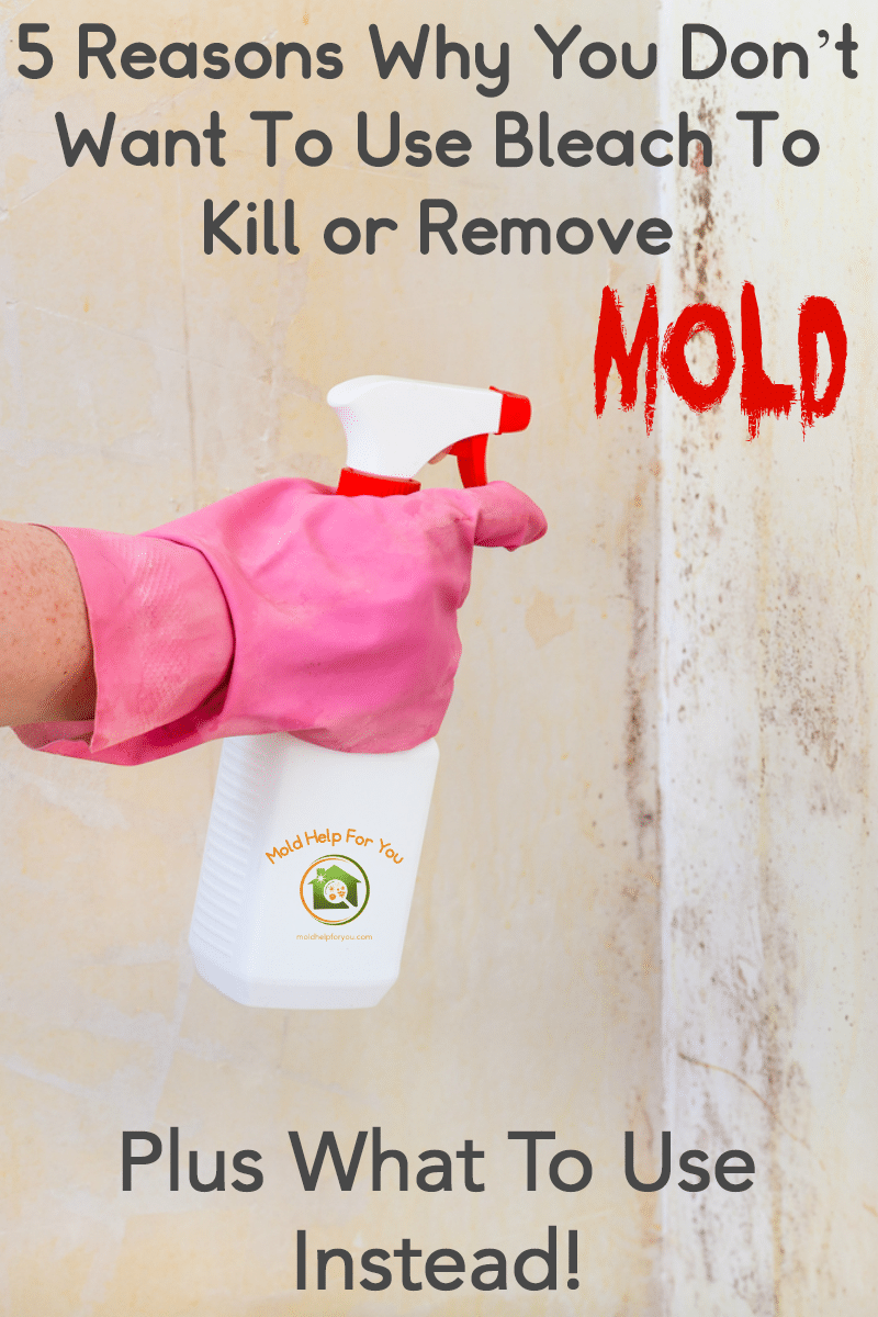 A spray bottle with bleach being used to spray a moldy wall. Does bleach kill mold? Find out why you should not use bleach to clean mold.