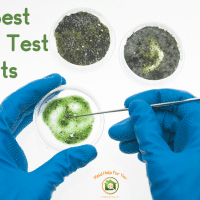 The 7 Best Mold Test Kits