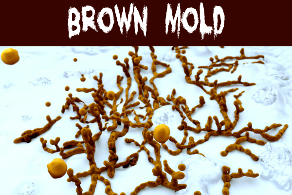 Brown mold threads on a wall