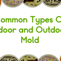 Common Types Of Mold (Indoor and Outdoor)