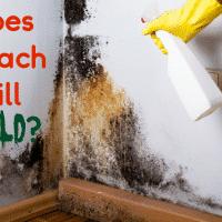 Does Bleach Kill Mold?