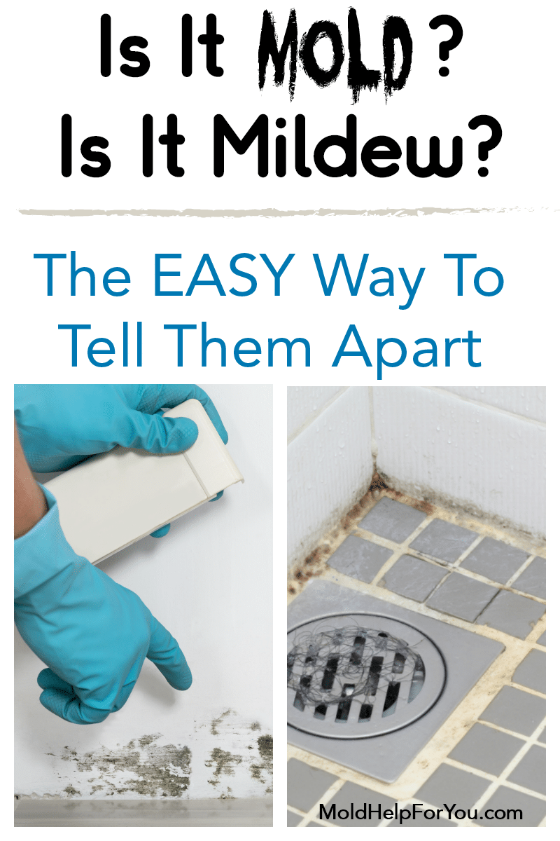 Is is mold? Is it mildew? Two images trying to help you tell them apart.