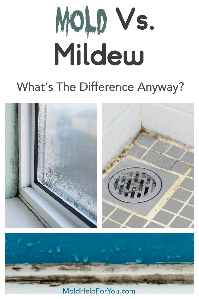 A window with mold around the frame. Or is it mildew? Mold vs. mildew.