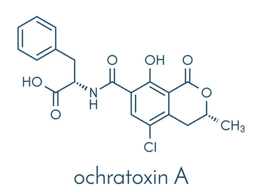 Ochratoxin Mycotoxin