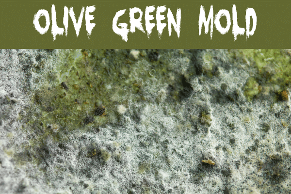 Olive Green Mold on a wall