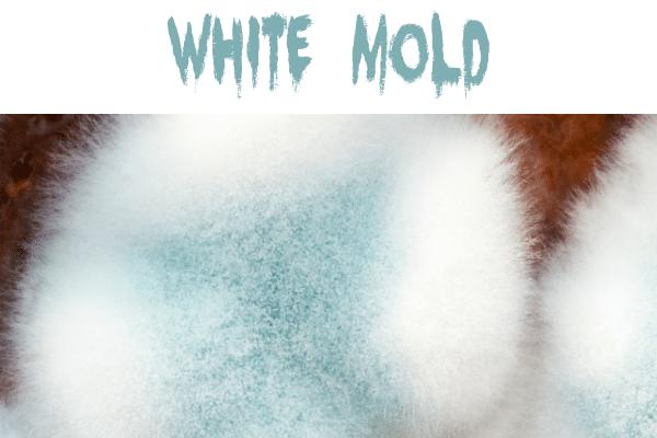 White fuzzy mold