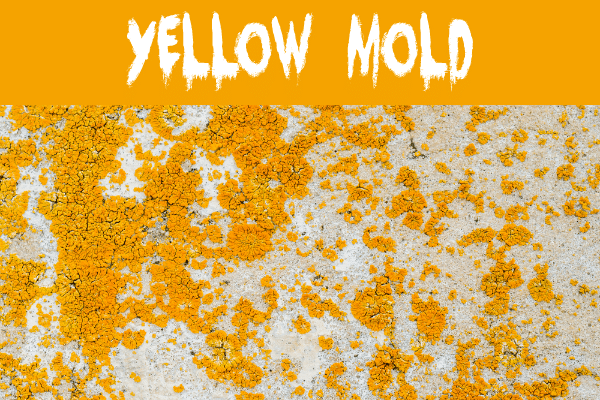 Yellow mold on a wall