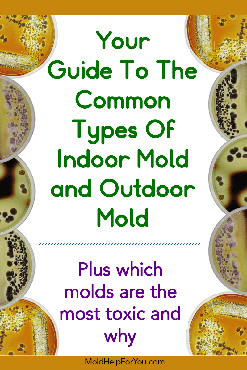 Petri dishes with the most common types of mold