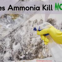Does Ammonia Kill Mold?