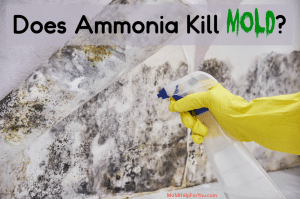A spray bottle with ammonia being sprayed to remove mold