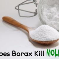 Does Borax Kill Mold?