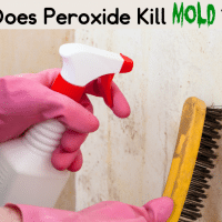 Does Hydrogen Peroxide Kill Mold?