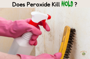DIY mold spray with peroxide. Person wondering if peroxide kills mold