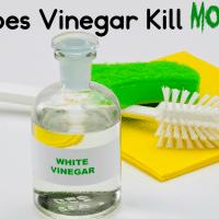 Does Vinegar Kill Mold?
