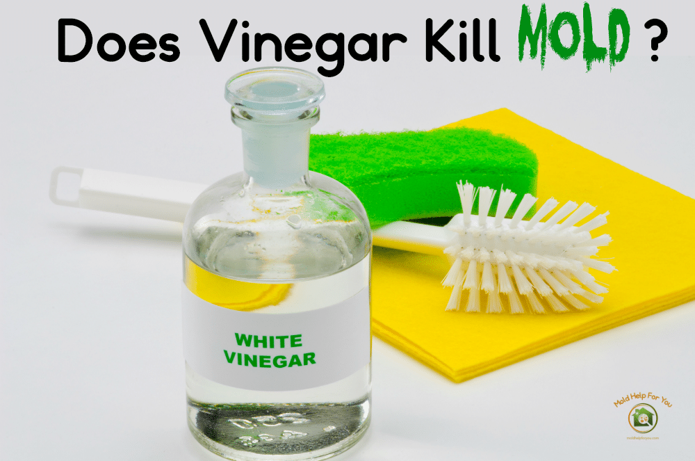 How to Kill Mold With Vinegar: 14 Steps (with Pictures