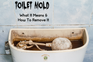 """A moldy toilet tank with the caption """"toilet mold - what it means and how to remove it"""" written above"""