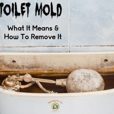 Toilet Mold – What It Is, How To Remove It, and How To Prevent It