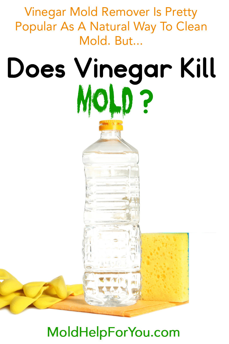 A bottle of vinegar, a yellow sponge, and a pair of yellow dish washing gloves. Does vinegar kill mold is written above the image.