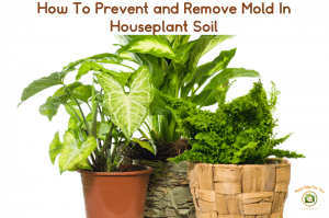 Houseplants without mold in the potting soil