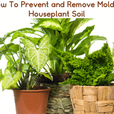 How To Prevent and Remove Mold In Houseplant Soil