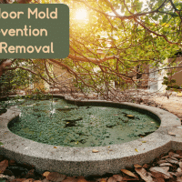 Outdoor Mold Prevention and Removal