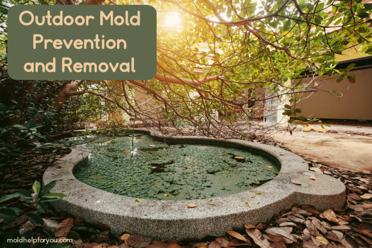 Outdoor mold opportunities - a stagnant pond, piles of leaves, and poor drainage
