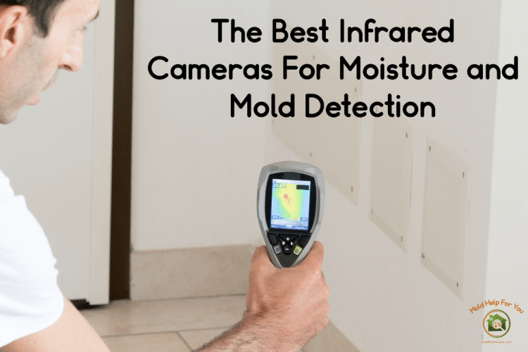 Using an infrared camera to detect moisture and mold
