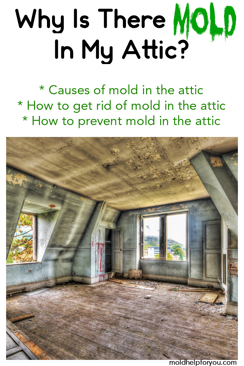 How To Prevent Attic Mold Attic Mold Tips Mold Help
