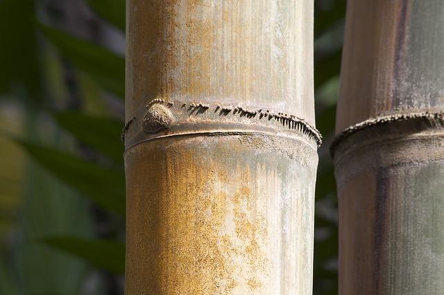 Moldy Bamboo