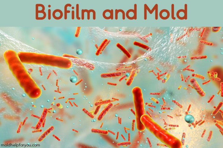 Biofilm with mold spores under a microscope