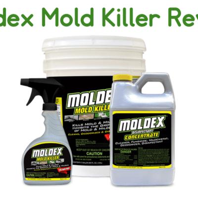 Moldex Review