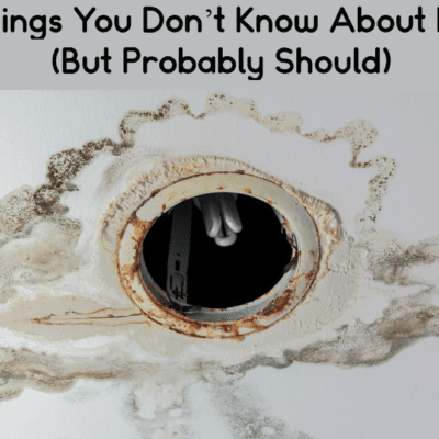 7 Things You Don't Know About Mold (But Probably Should)