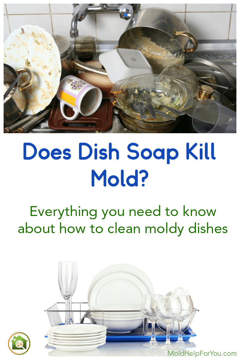 A sink full of moldy dishes. Below is an image of the clean dishes with the mold removed.