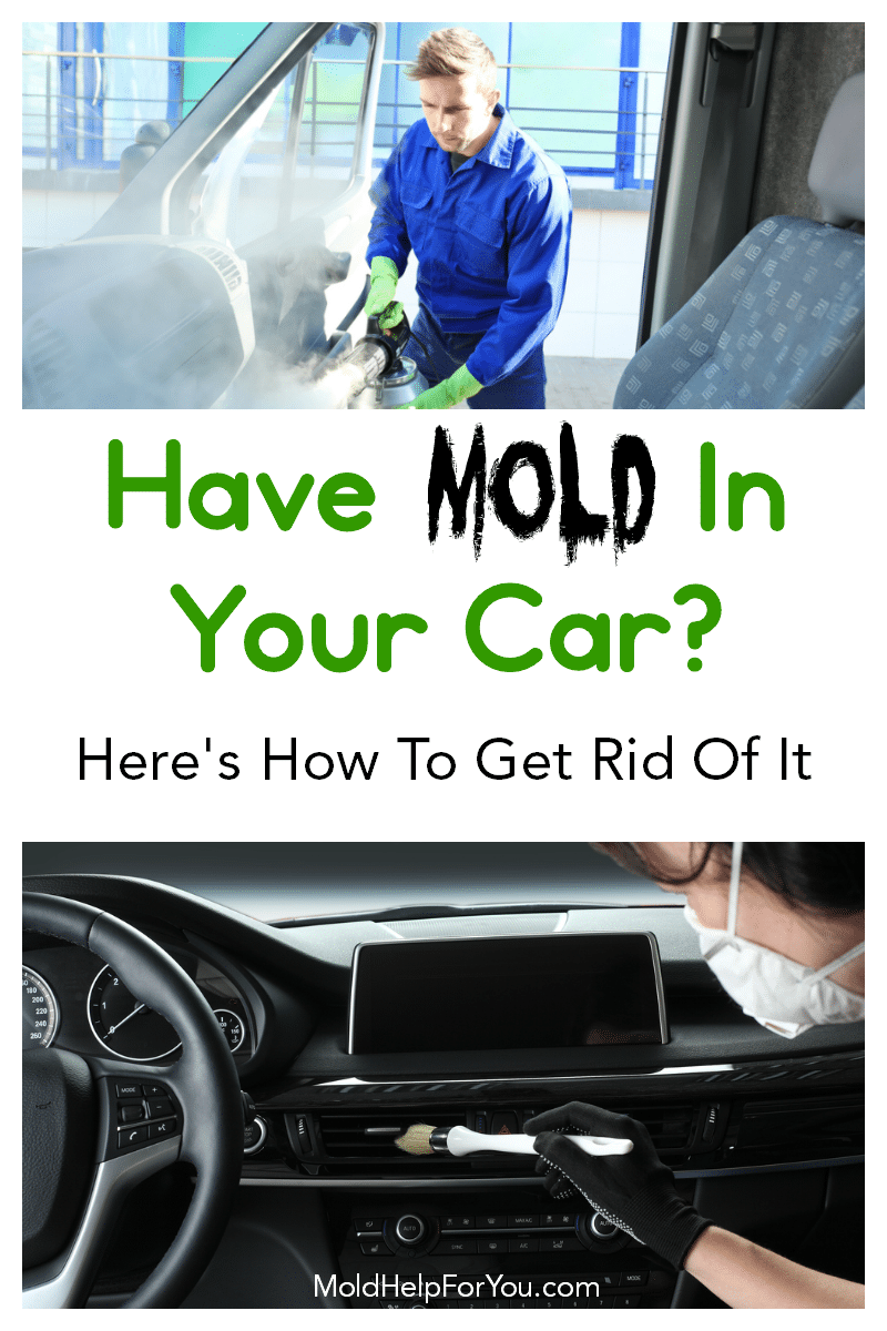 Getting rid of mold in a car with fogging and detailing