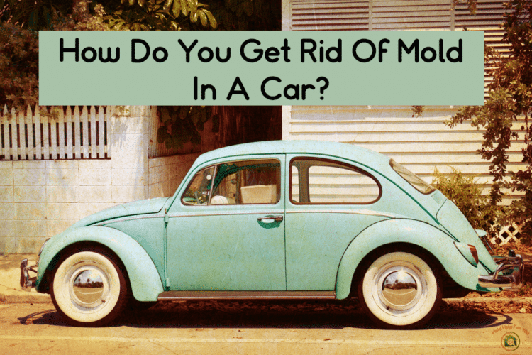 "Cute VW bug with a banner above that says ""how do you get rid of mold in a car?"""