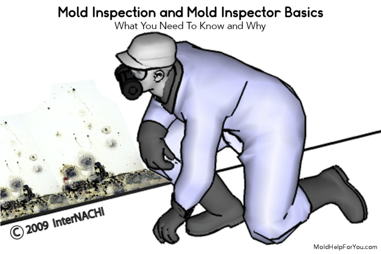 A mold inspector looking at mold on a wall during a mold inspection