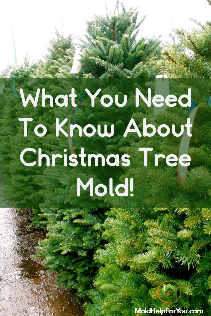 "A lot of Christmas trees with the overlay text of ""what you need to know about Christmas tree mold."""