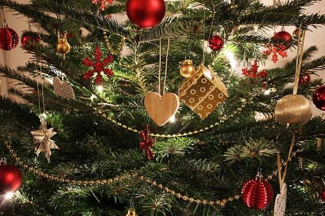 A live Christmas Tree at risk for mold growth
