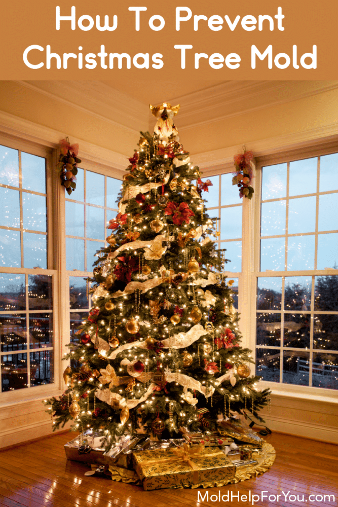 """A decorated Christmas Tree in front of picture windows on a wood floor. Caption reads """"how to prevent Christmas Tree mold."""""""
