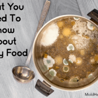 What You Need To Know About Moldy Food