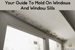 Mold growing around the top of a window.