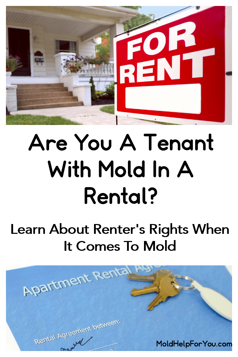A for rent sign in from of a small house in additional to a mock rental agreement