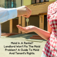 Mold In A Rental? Landlord Won't Fix The Mold Problem? A Guide To Mold And Tenant's Rights.
