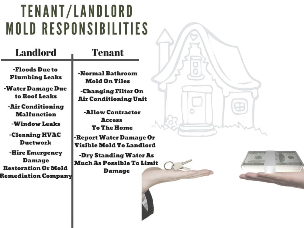 A list of tenant and landlord mold responsibilities