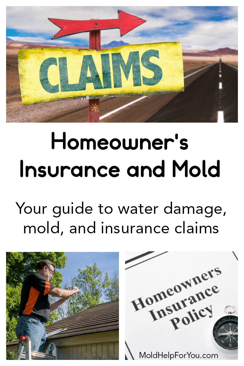 An insurance adjuster inspecting roof damage for a mold claim